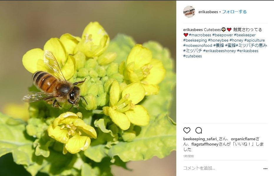 ミツバチの恵みとろり インスタ
