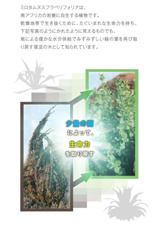 ミロタムヌスフラベリフォリア葉・茎エキス配合でうるおいキープ力をサポート